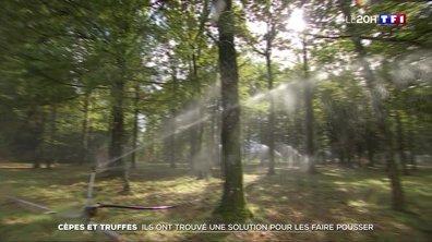 Pour lutter contre la sécheresse, les producteurs de champignons ont inventé des systèmes ingénieux