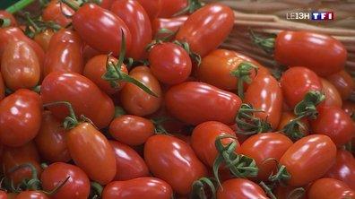 Pourquoi est-il impossible de trouver des tomates bio françaises en ce moment ?