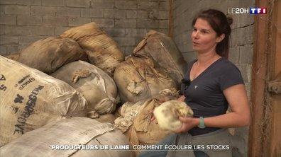 Producteurs de laine : comment écouler les stocks