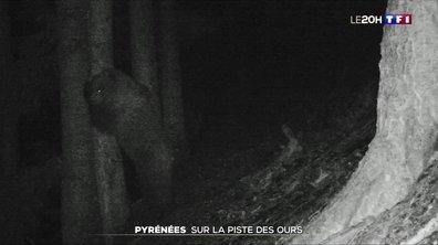 Pyrénées : sur la piste des ours