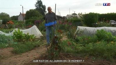 Que cultiver et récolter au jardin en septembre ?