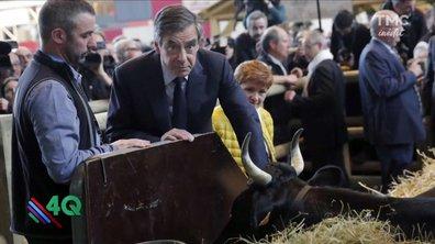 Les 4Q - La Star du Salon de l'Agriculture c'est elle !
