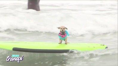 Jeudi Transpi : le dog surfing
