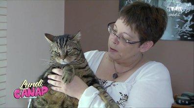 Lundi canap' : La nouvelle télé-réalité avec... des chats...