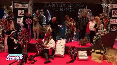 Mercredi Transpi : le salon des animaux
