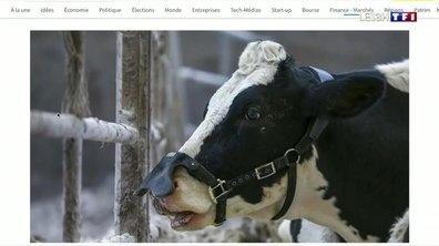 Réchauffement climatique : les vaches bientôt masquées ?