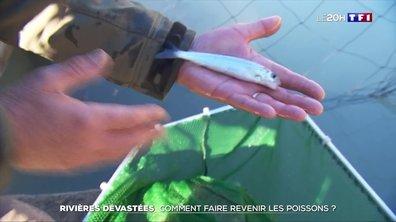 Rivières dévastées dans les Alpes-Maritimes : comment faire revenir les poissons ?