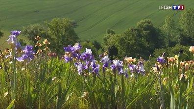 Roland Dejoux cultive l'une des plus belles collections d'iris du pays