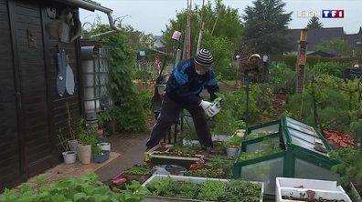 Saints de Glace : les conseils de jardiniers