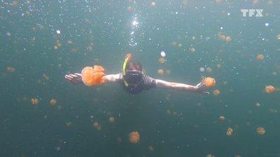 Seb en Papouasie : on a nagé au milieu d'un banc de méduses