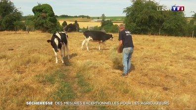 Sécheresse : des mesures exceptionnelles pour les agriculteurs