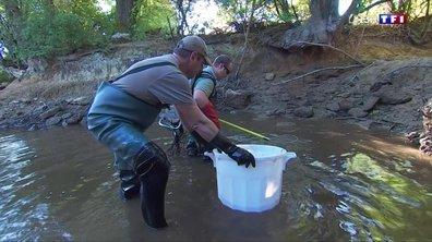 Sécheresse : des poissons en souffrance dans les cours d'eau