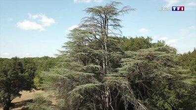 Sécheresse : les arbres de l'Indre et du Loir-et-Cher souffrent
