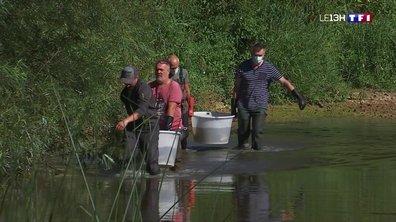 Sécheresse : opération de sauvetage des poissons menacés dans le Doubs