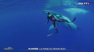 Sensations : à la rencontre des plongeurs de l'extrême