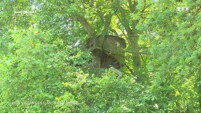 SEPT À HUIT LIFE - Des vacances dans les arbres