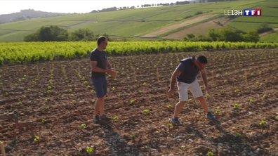 Série Sancerre (2/4) : à la découverte du savoir-faire d'une famille de viticulteurs
