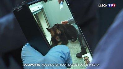 Solidarité : des nouvelles de l'ours Mischa après l'incroyable mobilisation pour le sauver