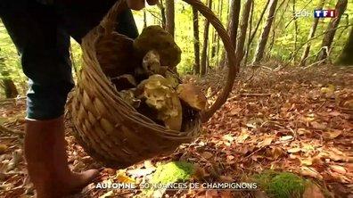 Stages dédiés aux champignons : savourer les trésors de l'automne en toute sécurité