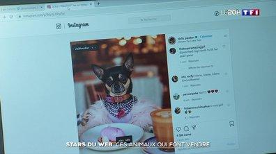 Stars du web : ces animaux qui font vendre