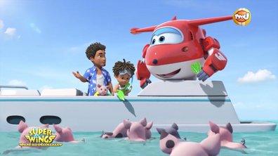 Exceptionnel : Des cochons nageurs aux Bahamas !