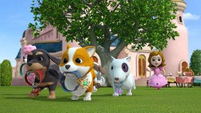 Les petits chiens de son Altesse - Superwings (saison 1)