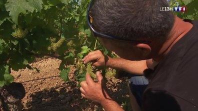 Sur la route du vin de Saumur dans le Maine-et-Loire