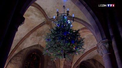 Sur les traces des sapins de Noël au bord du Rhin