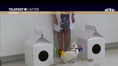Téléfoot, l'After - Le Buzz : Achille le chat, cousin de Paul le poulpe
