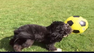 MyTELEFOOT L'After - Le Buzz : Ronaldog, le chien star du foot