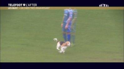 Téléfoot, l'After - Le Buzz : Un chien très envahissant