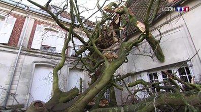 Tempête Ciara : près de 21 000 foyers privés d'électricité dans le Nord-Pas-de-Calais