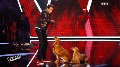 Instant LOL, Mika perd un talent et se console auprès de ses chiens !