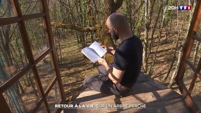 Therapie: retour à la vie sur un arbre perche