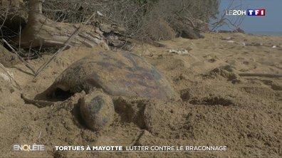 Tortues à Mayotte : lutter contre le braconnage