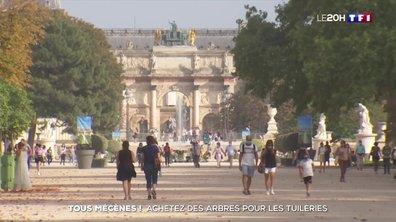 """""""Tous mécènes"""" : achetez des arbres pour les Tuileries"""