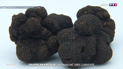 Truffe française : un marché très convoité