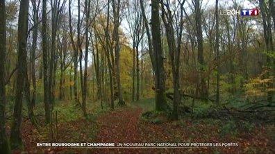 Un nouveau parc national en Bourgogne