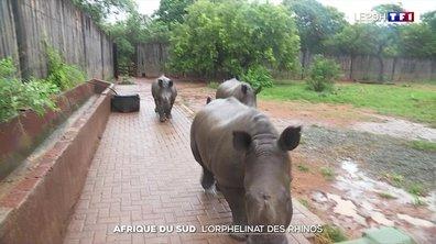 Un orphelinat pour les bébés rhinocéros en Afrique du Sud