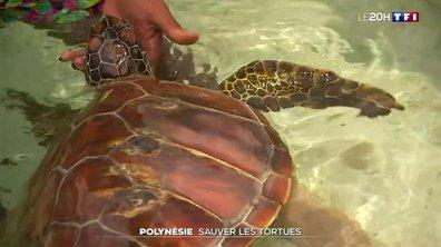 Une association au chevet des tortues marines en Polynésie