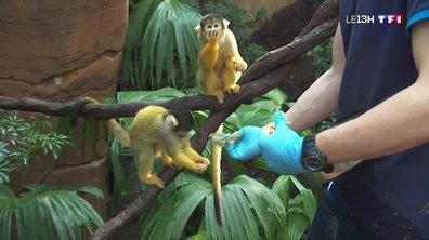 Une nouvelle et immense serre tropicale au zoo de Beauval