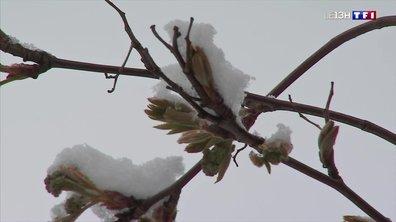 Vague de froid : la neige de retour dans les Vosges