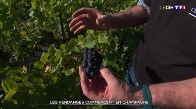Vendanges 2021 : un millésime qui s'annonce difficile en Champagne