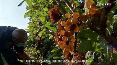 Vendanges : à la découverte du crémant d'Alsace