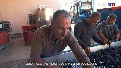 Vendanges : étape dans un domaine de Bourgogne