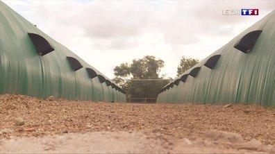 Vendée : les gérants d'un camping attaquent en justice un éleveur pour la mauvaise odeur de ses canards