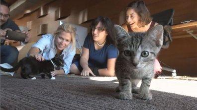 Chat c'est trop mignon !