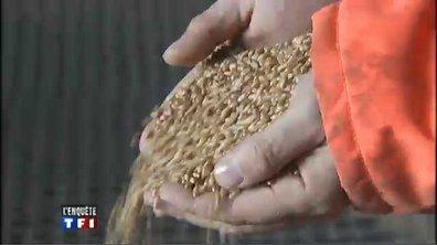 """Gaspillage alimentaire : """"Pour un millimètre de plus ou de moins, les céréales jetées par tonnes"""""""