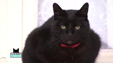 Queeny, le seul chat qui ne sort pas la nuit