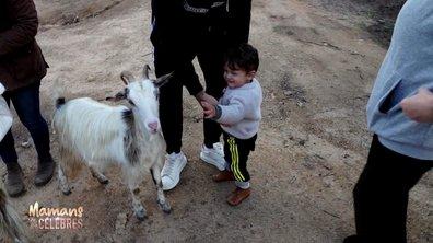Visite d'une ferme en Corse pour Juliann